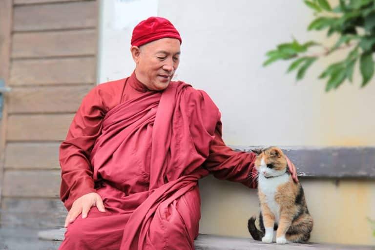 心道法師與貓